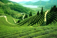 Darjeeling Hotels, Travel, Deram Stay Holiday